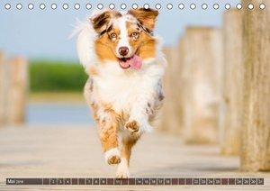 Herzenshunde 2018 (Tischkalender 2018 DIN A5 quer)