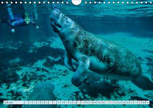 Tauchen - Abenteuer unter Wasser