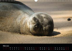 Kauai - The Garden Island (Wandkalender 2020 DIN A3 quer)