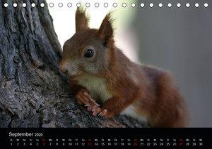 Eichhörnchen in freier Natur