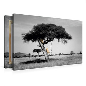 Premium Textil-Leinwand 75 cm x 50 cm quer Colorkey FineArt: Zwe