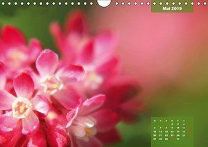 Maleriesche NATUR - Nahbereich (Wandkalender 2019 DIN A4 quer)