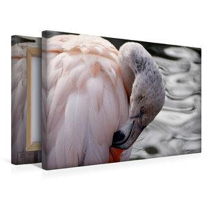 Premium Textil-Leinwand 45 cm x 30 cm quer Chile Flamingo