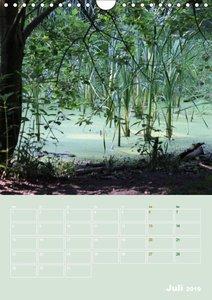 Bolmke - Naturschutzgebiet Dortmund (Wandkalender 2019 DIN A4 ho