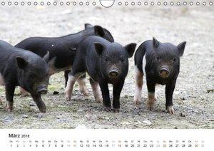 Schwein gehabt!
