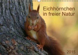 Eichhörnchen (Wandkalender 2014 DIN A3 quer)