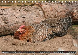 Hühner im eigenen Garten (Tischkalender 2019 DIN A5 quer)
