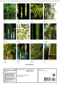 Der Bambus (Wandkalender 2020 DIN A3 hoch)