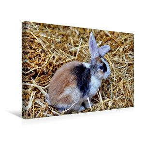 Premium Textil-Leinwand 45 cm x 30 cm quer Dreifarbiges Kaninche