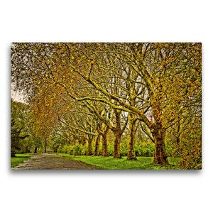 Premium Textil-Leinwand 75 cm x 50 cm quer Goldene Baumallee