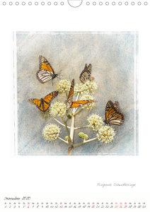 Monarchschmetterlinge