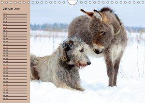 Das Esel-Paradies - Hunde und andere Feunde (Wandkalender 2019 D