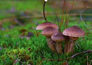 Pilze in unseren Wäldern (PosterbuchDIN A3 quer)