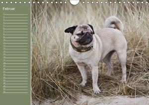 Mopsiger Geburtstagskalender (Wandkalender immerwährend DIN A4 q