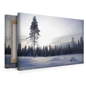 Premium Textil-Leinwand 45 cm x 30 cm quer Nadelwald im verschne