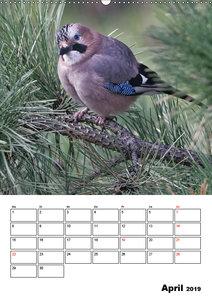 Vögel im heimischen Garten (Wandkalender 2019 DIN A2 hoch)