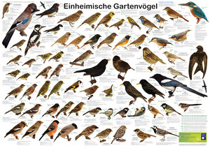 Einheimische Gartenvögel