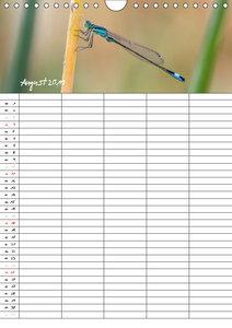 Libellen / Familienplaner (Wandkalender 2019 DIN A4 hoch)