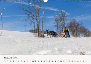 Schlittenhundesport (Wandkalender 2019 DIN A3 quer)