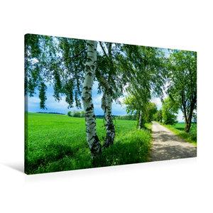 Premium Textil-Leinwand 90 cm x 60 cm quer Saftiges Grün
