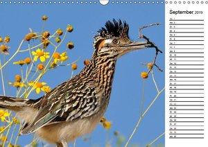 Flora und Fauna der Sonora Wüste (Wandkalender 2019 DIN A3 quer)