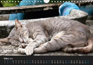 Tierisches Thailand (Wandkalender 2019 DIN A4 quer)