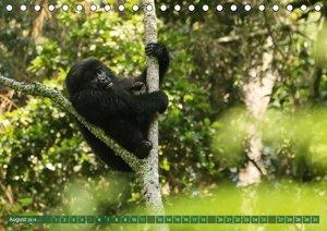 Putzige Tierwelt Afrikas