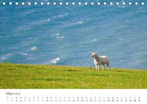 Schafe - Weich und wollig (Tischkalender 2018 DIN A5 quer)