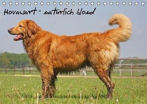 Hovawart - natürlich blond (Tischkalender 2016 DIN A5 quer)