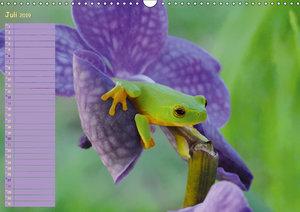 Vorsicht: Froschkönig (Wandkalender 2019 DIN A3 quer)
