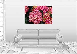 Premium Textil-Leinwand 120 cm x 80 cm quer Bauernhortensie
