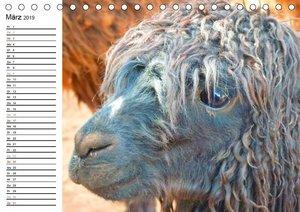 Alpakas und Lamas (Tischkalender 2019 DIN A5 quer)