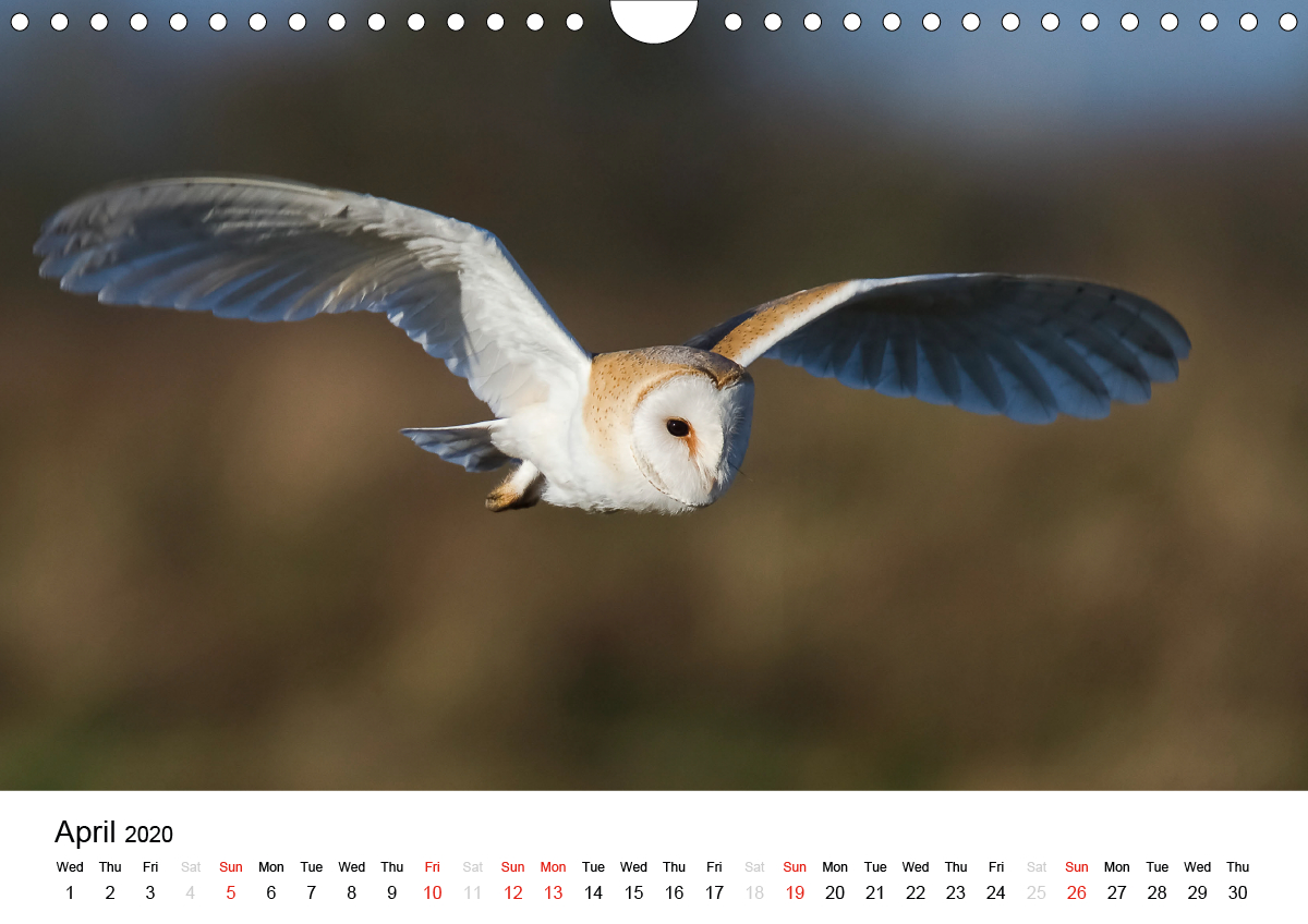 White Birds on the Wing - zum Schließen ins Bild klicken