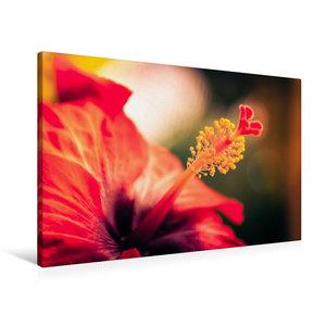 Premium Textil-Leinwand 90 cm x 60 cm quer Hibiskus-Blüte, rot