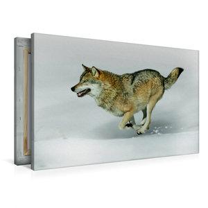 Premium Textil-Leinwand 90 cm x 60 cm quer Wolf verfolgt Beute