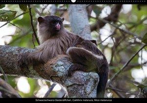 Tiere des Pantanal (PosterbuchDIN A3 quer)