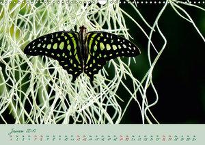 Edelfalter - 2 - (Wandkalender 2019 DIN A3 quer)