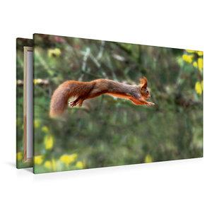 Premium Textil-Leinwand 120 cm x 80 cm quer Eichhörnchen springt