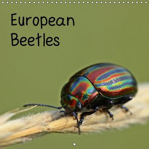 European Beetles (Wall Calendar 2015 300 × 300 mm Square)