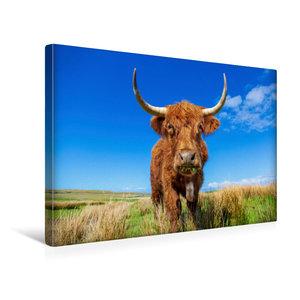 Premium Textil-Leinwand 45 cm x 30 cm quer Highland Kuh