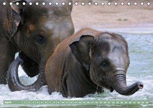 Elefanten - Badespaß am Strand (Tischkalender immerwährend DIN A