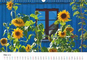 Sonnenblumen 2019 (Wandkalender 2019 DIN A3 quer)