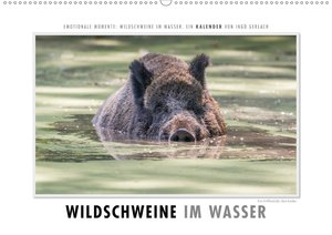 Emotionale Momente: Wildschweine im Wasser