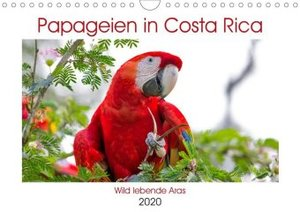 Papageien in Costa Rica (Wandkalender 2020 DIN A4 quer)