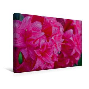 Premium Textil-Leinwand 45 cm x 30 cm quer Rosa Rhododendron