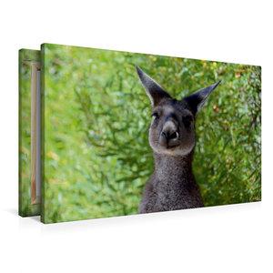 Premium Textil-Leinwand 90 cm x 60 cm quer Wallaby, Western Aust