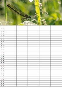 Libellen / Familienplaner (Wandkalender 2019 DIN A3 hoch)