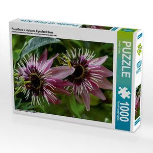 Passiflora x violacea Eynsford Gem 1000 Teile Puzzle quer