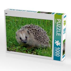 Igel 1000 Teile Puzzle quer