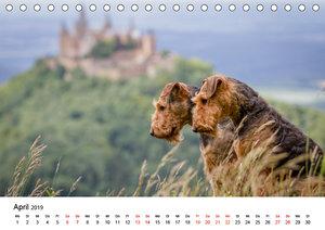 Airedale-Terrier, was sonst! (Tischkalender 2019 DIN A5 quer)